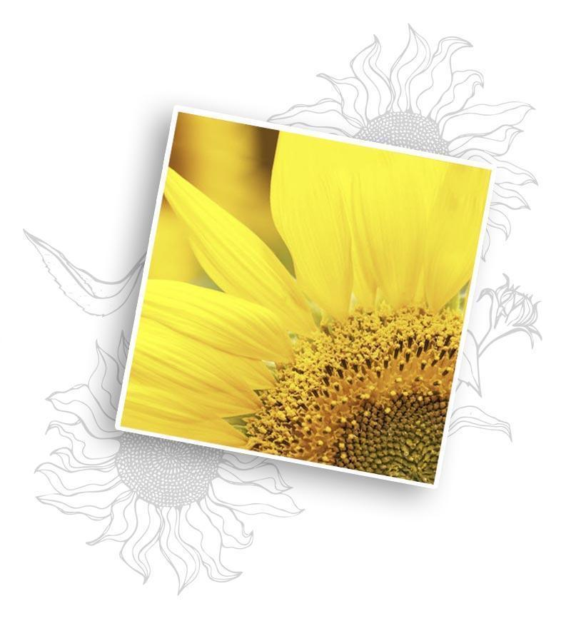 Miya Cosmetics - olejek słonecznikowy - kosmetyki