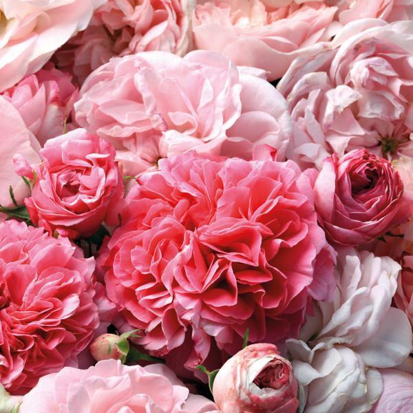 Miya Cosmetics Roza Beauty Essence (1)